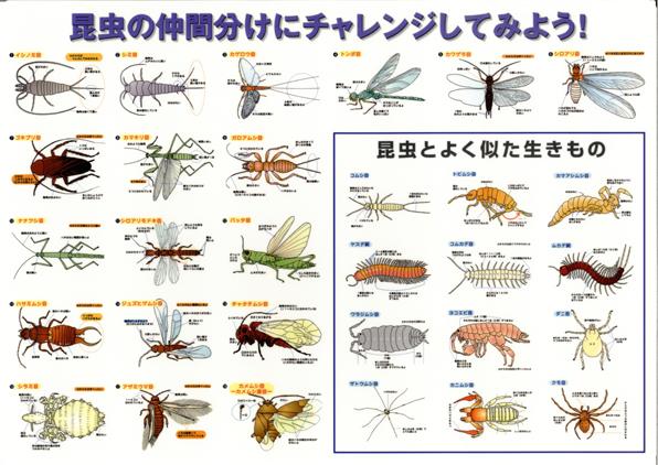 環境教育ライブラリー: 虫の仲間...